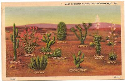 Vintage Linen PC; Many Varieties of Cacti of the Southwest; Names Labeled