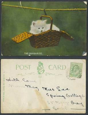 White Cat Kitten Hanging in a Basket Rope The Favourite 1909 Old Colour Postcard