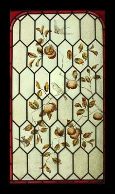 Rare Victorian Painted Botanical With Birds Antique English Stained Glass Window