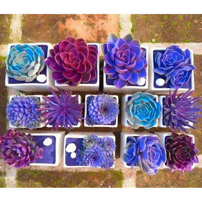 400Pcs Mixed Succulent Seeds Lithops Rare Potted Cactus Plants Easy to Grow Fash