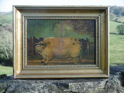 SUPERB 19thc OIL PAINTING ON BOARD OF AN OLD ENGLISH  SPOTTED PIG