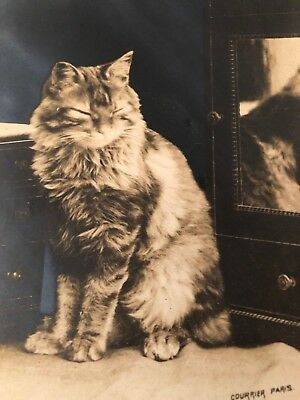 Antique Vintage Paris French Sweet Cat Postcard RPPC Old Photo Adorable