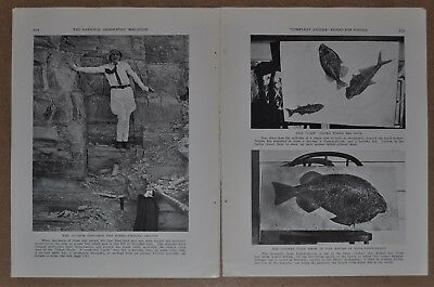 1934 FOSSIL HUNTING magazine article, Fossil Wyoming, Paleontology