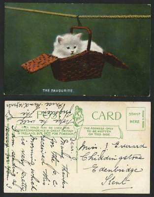 Cat Kitten, Hanging in a Basket Rope, The Favourite Old Colour Postcard Pet Pets