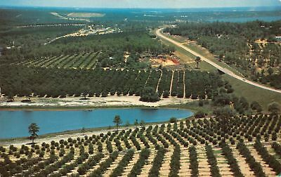C13-3065, Citrus Groves And Lakes, From Citrus Tower, Clermont, Fl