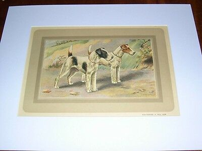Rare Large Antique French Color Dog Print 1931 F. Castellan Nr 78 Fox Terrier