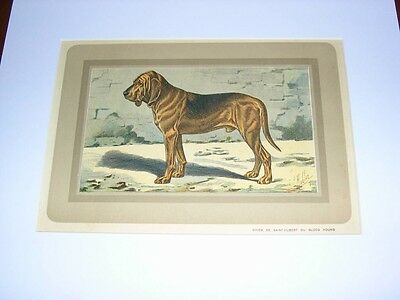 Rare Large Antique French Color Dog Print 1931 P. Mahler Nr 39 Bloodhound