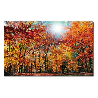 Trademark Fine Art Camouflage by Philippe Sainte-Laudy Canvas Wall Art, 22x32...
