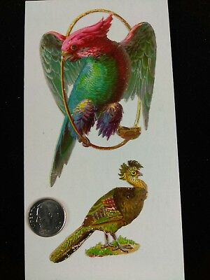 Vtg Victorian Die Cut Scrap-1880's-1890's Lot of 2 Birds Nice Cuts
