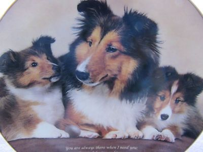 "Shelties Collectors Plate ""faithful Friend "" ""danbury Mint"" # F8365 Limited Ed"