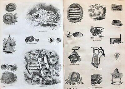ca1850 INSECTS: Bees/Bugs/Beetles/Butterflies & MORE Thousands of b/w ENGRAVINGS