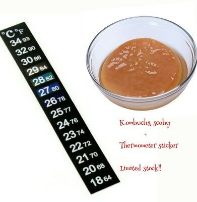 LARGE KOMBUCHA SCOBY - ORGANIC - printed instructions -FREE Delivery