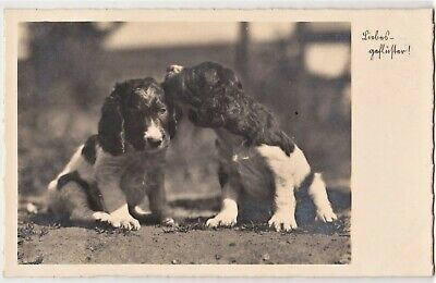 Two Spaniel Puppies kissing cute vintage c1930s RPPC