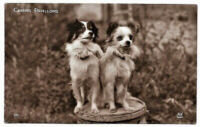 PAPILLON DOGS - cute Papillon couple vintage c1920s RPPC A. Noyer Races Canines