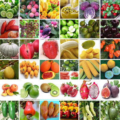 200PC Mixed Tomato Seeds Ornamental Potted Vegetable Various Fruit Seeds Garden