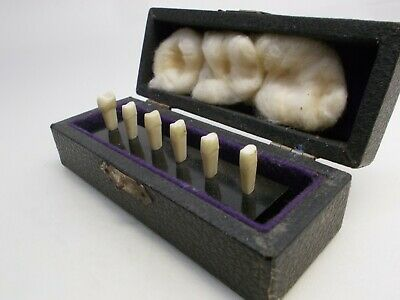 Vintage dental dentist tooth teeth prototype model set antique 1930's medical