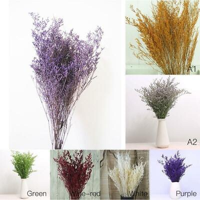 1 Bunch Valentine grass Natural Dried Flower Forget me not Plant Home Decor uk
