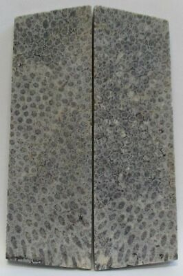 Fossil Coral Scales  4-1/2 to 4-3/4 x 1-7/16 to 1-9/16 x 7/32