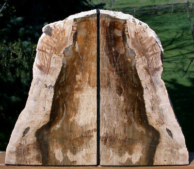 SiS: MUST SEE Fossil Petrified Wood SEQUOIA Bookends - Oregon Originals!