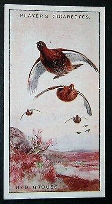 RED GROUSE     Vintage 1927 Colour Card  Unmounted  VGC