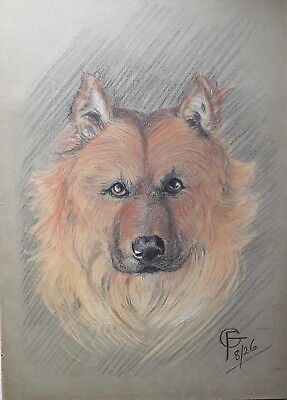 Spitz Chow Chow Type 1926 Crayon Pastel Dog Drawing On Card