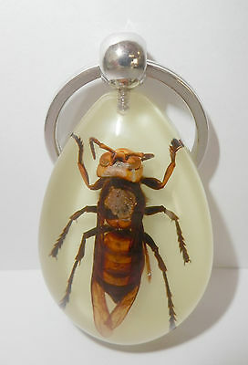 Insect Key Ring Lesser Banded Tiger Hornet Vespa affinis YK09 Glow in the dark