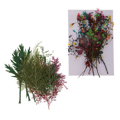 38pcs Colorful Pressed Dried Flower Leaves for DIY Card Making Decoration