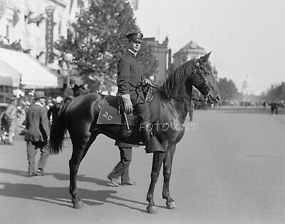 c1910 Metro DC Mounted Police Officer 8x10 Photo - Vintage Cop & Horse Picture 1