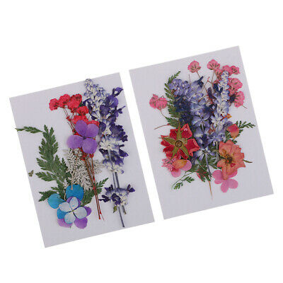 2 Pack Multiple Pressed Dried Flowers Real Flower for Art Craft Scrapbooking