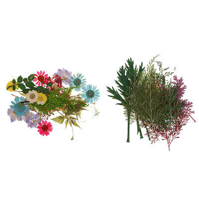 54pcs Natural Pressed Dried Flowers And Leaves Art Craft Supplies Decors