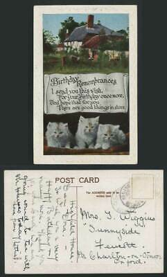 Cats Kittens Cottage Birthday Remembrances Old Postcard
