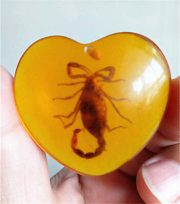 Lucky  Artificial amber heart shape Real Scorpion pendant+chain