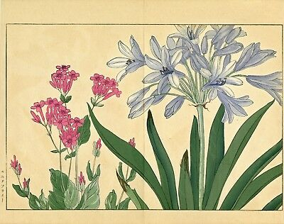 "Glorious KONAN Japanese woodblock floral print: ""AGARANTHUS and CATCHFLY"""