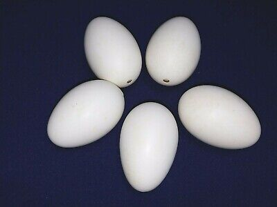 Extra Large Goose Eggs Blown and Dried Perfect for Painting or Crafts