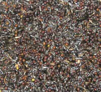 TONIC SEED MIX - 475g - AW BIRDS - OILY SEEDS FOR CHICK GROWTH - SOAK - FINCHES