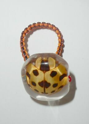 Insect Ring 13 Star Golden Ladybird Beetle Synonycha grandis Specimen Clear