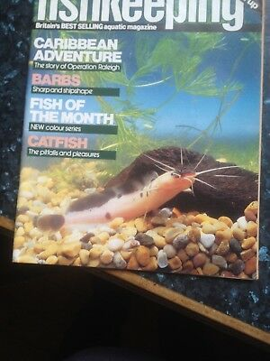 PRACTICAL FISHKEEPING -September 1985,Catfish the pleasures and pitfalls