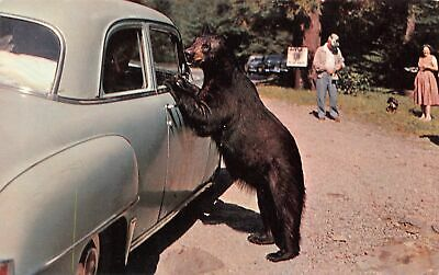C20-6279, Great Smoky Mountain,, Black Bear.