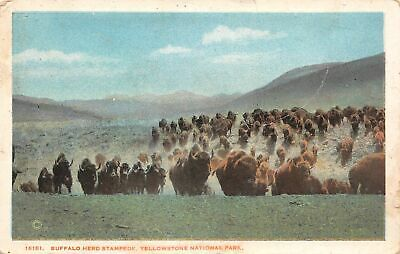 C20-6360, Buffalo Herd Stampede,, Yellowstone.