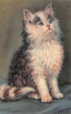 C20-6763, White And Brown Cat, .