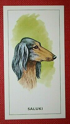 Saluki  1960's Vintage Dog Portrait Card  VGC