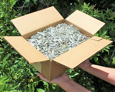 Loose California White Sage Smudge: Crushed Leaves 1 Pound CLEARANCE PRICED!