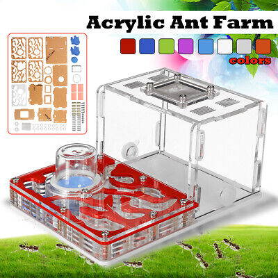 Acrylic Ant Farm Ants Work Educational Formicarium Acrylic Nest For Live Ants
