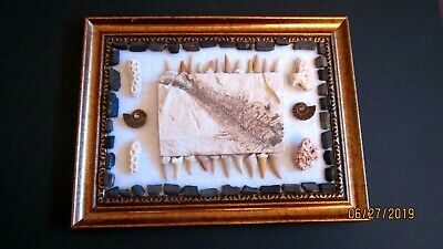 Superior Display of Fossil Fish, Shark  Ray-Teeth , Coral