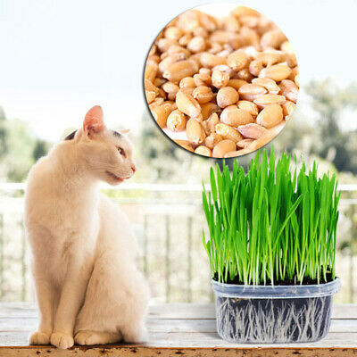 150g Sweet Oat Cat Grass Seeds Organic Grown Sprouting for Cats and other Pets