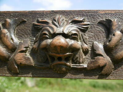 SUPERB 19thc OAK PANEL RELIEF CARVING WITH LION HEAD TO CENTRE & OAK LEAF SPRAY