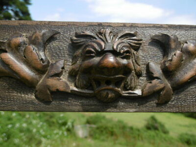 SUPERB 19thc OAK PANEL RELIEF CARVING WITH LION HEAD & OAK LEAF SPRAY (2)