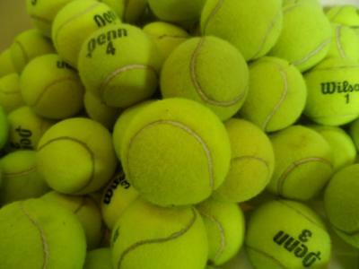 100 Dead Used Wilson Penn TENNIS BALLS Serving Dogs toys dog play fetch walkers