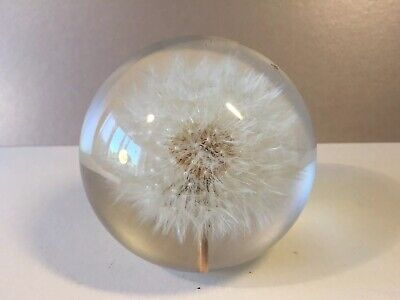 Hafod Grange Dandelion Seed Head In Lucite Paperweight, 2003 - make a wish...