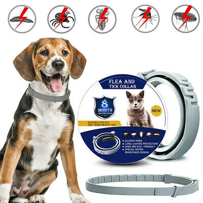 Adjustable For Dog Cat Pet 8 Months Protection Anti Flea and Tick Neck Collar